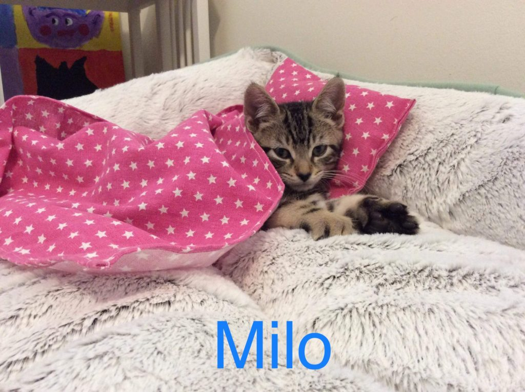 Milo is all tucked in :)
